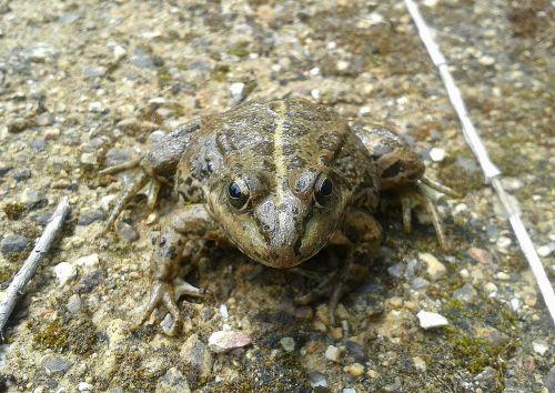 frog animal amphibians