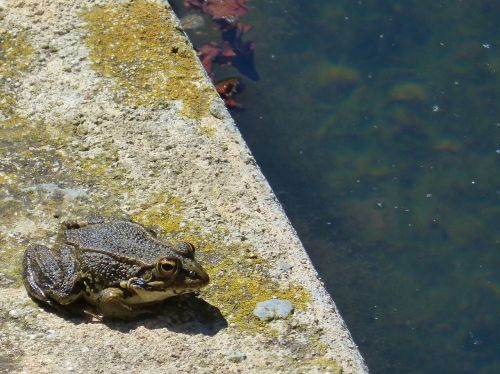 frog raft water