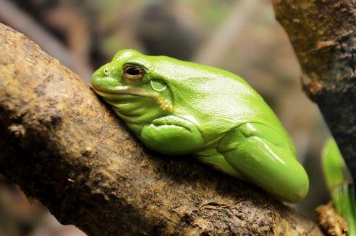 frog reptile animal