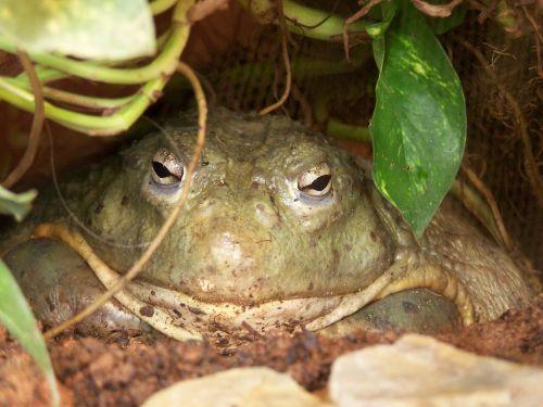 frog toad amphibians