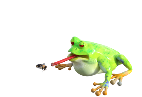 frog insect animal
