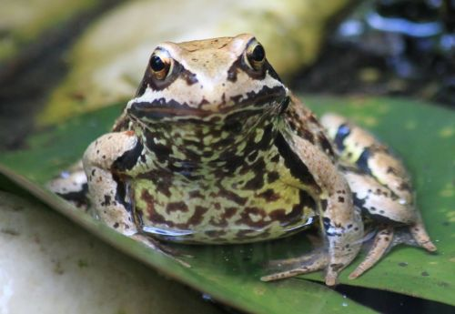 frog eyes close