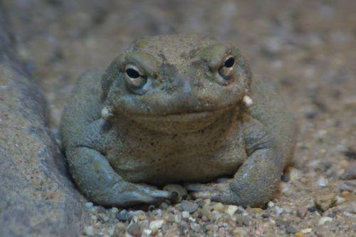frog staring animals