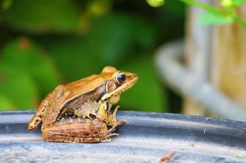 frog amphibians wildlife