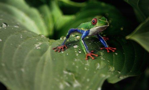 frog  amphibians  animal