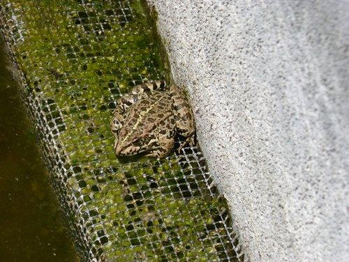 frog  raft  batrachian