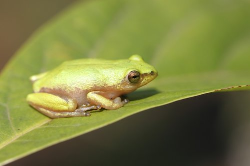 frog  durban  south africa