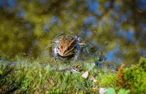 frog  toad  tree frog