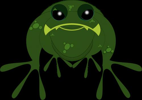 frog toad amphibian