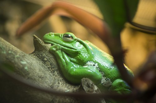 frog  tropical  exotic