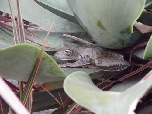 frog nature zoology