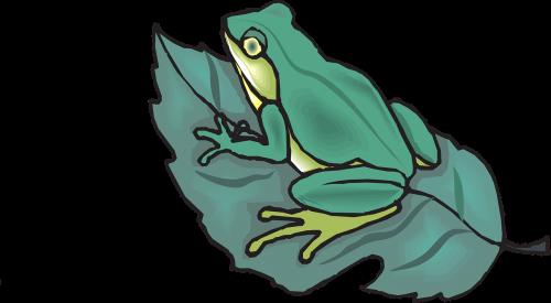 frog amphibian tropical