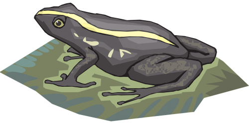 frog amphibian rainforest