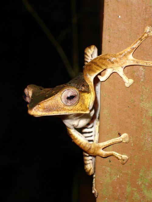 frog jungle wildlife