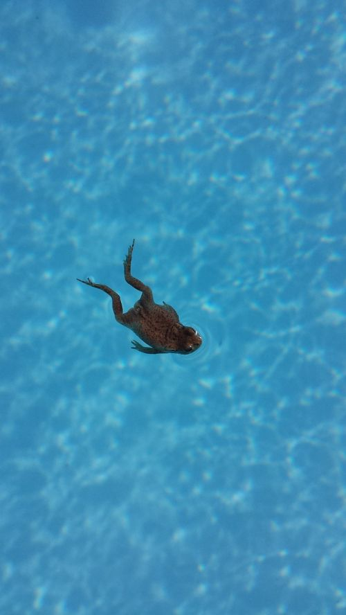 frog swimming pool swimming