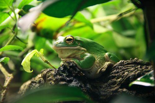 frog terrarium amphibians