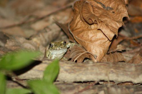 frog hiding tiny