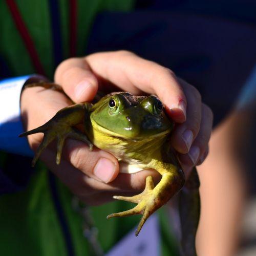 frog fair boy