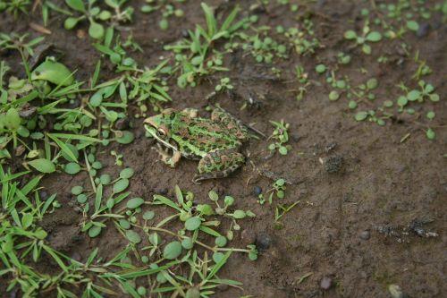 frog nature ecology