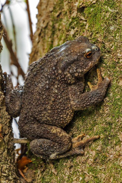 frog amphibian animal