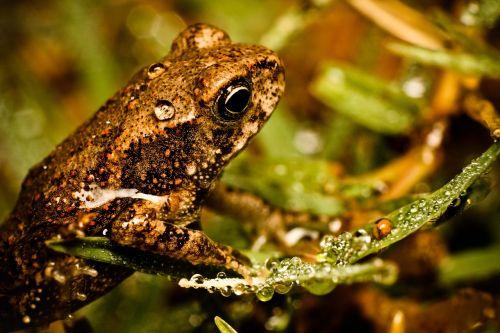 frog macro miniature