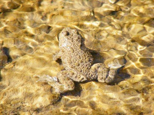 frog animal amphibian