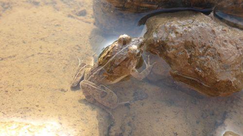 frog river cam