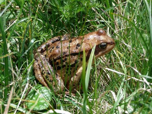 frog meadow green