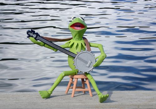 Frog By The Water