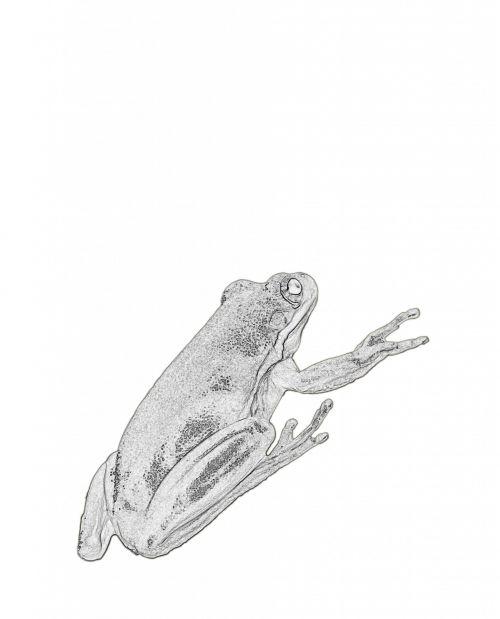 Frog Clipart Illustration