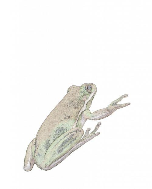 Frog Color Illustration Clipart