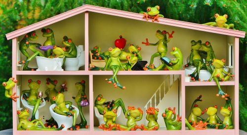 frogs funny home