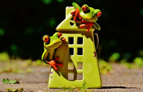frogs home funny
