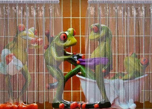 frogs bathroom curious