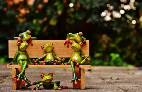 frogs sociable bank