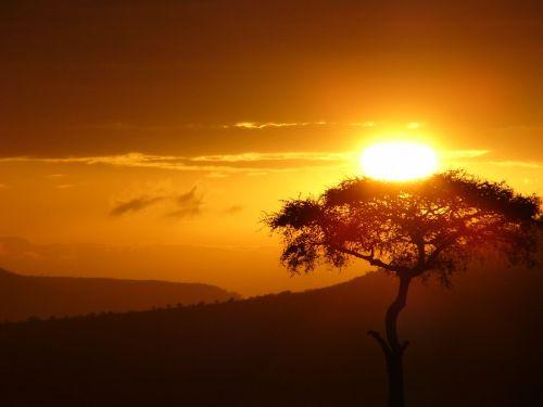 from doubt sun tree sunrise