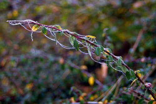 frost cobweb icy