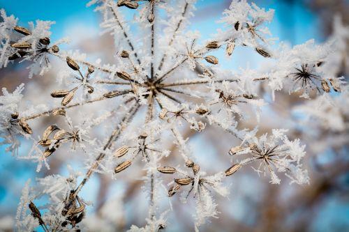 frost ice ripe
