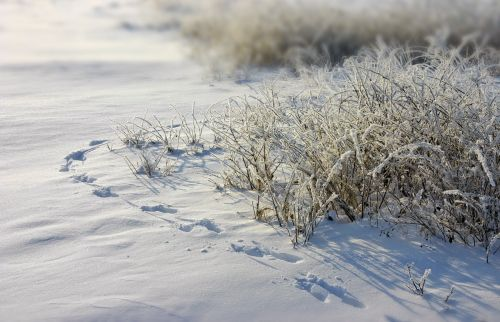 frost traces snow