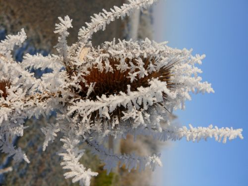 frost eiskristalle winter