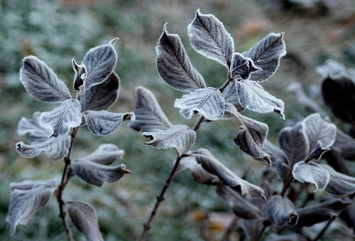 frost  ground frost  foliage
