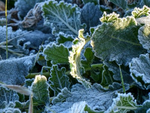 Frosty Crystals On A Plant