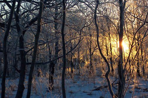 Frosty Sunrise