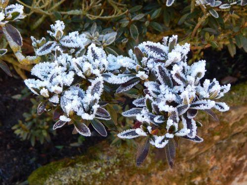 frozen eiskristalle ice