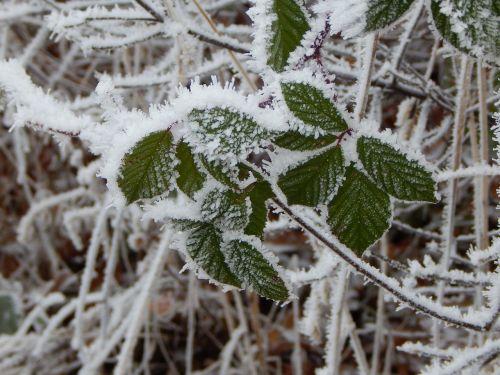 frozen ice eiskristalle