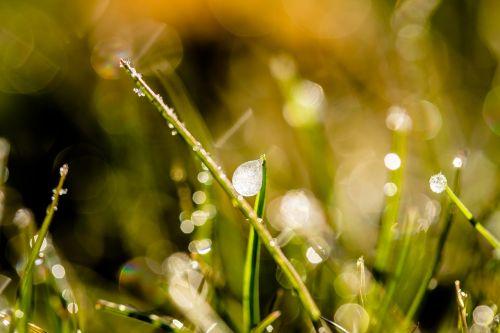 frozen dew drops dewdrop drip