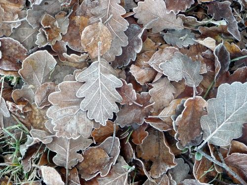 frozen leaves forest leaves