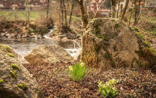 frühlingsblüher  stones  river
