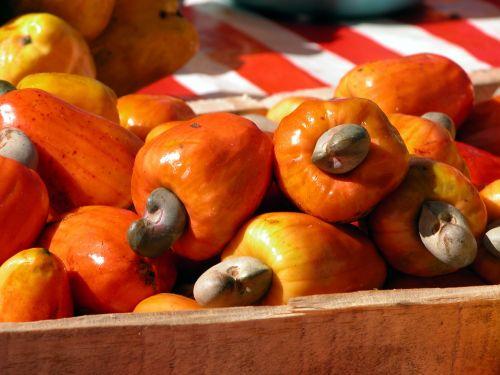 fruit cashew nuts brazil