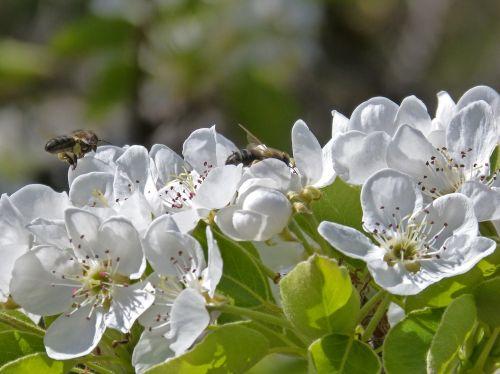 fruit flower bee